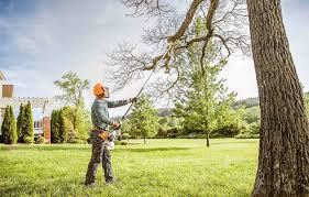 Tips on Finding the Best Tree Trimming Services